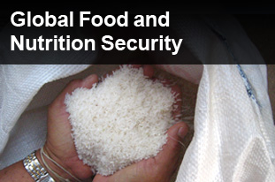 Global Food and Nutrition Security