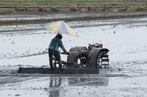Farmer levelling a rice field in Thailand.