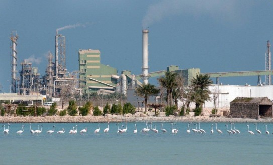 On-site bird sanctuary at Gulf Petrochemicals Industries Co., hosting over 30,000 birds with a record of 78 different species.