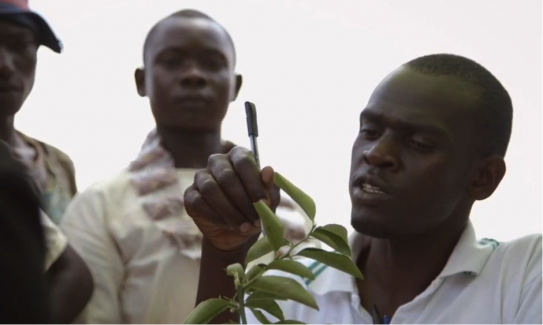 The CABI-led Plantwise programme provides answers to a devastating problem facing smallholders today: plant pests.