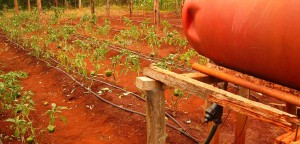 Drip irrigation technology