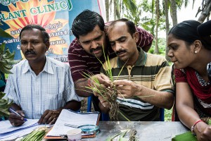 Plantwise plant clinic in India © CABI