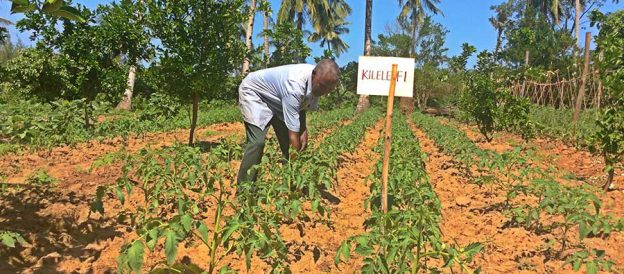 driving-agricultural-innovation-at-the-kenyan-coast