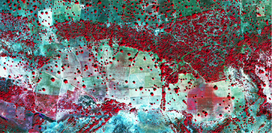 False colour, high-resolution imagery over smallholder fields in Mali. Imagery from DigitalGlobe.