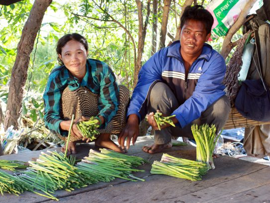 Mr. Hua Van San and his wife, prepare asparagus for market. (Photo courtesy of iDE/2013)