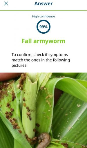 AI App Helps Farmers Detect Fall Armyworm in India - Farming First