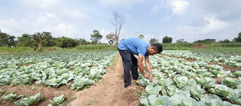 How Irrigation Is Becoming An Engine For Growth In Sri