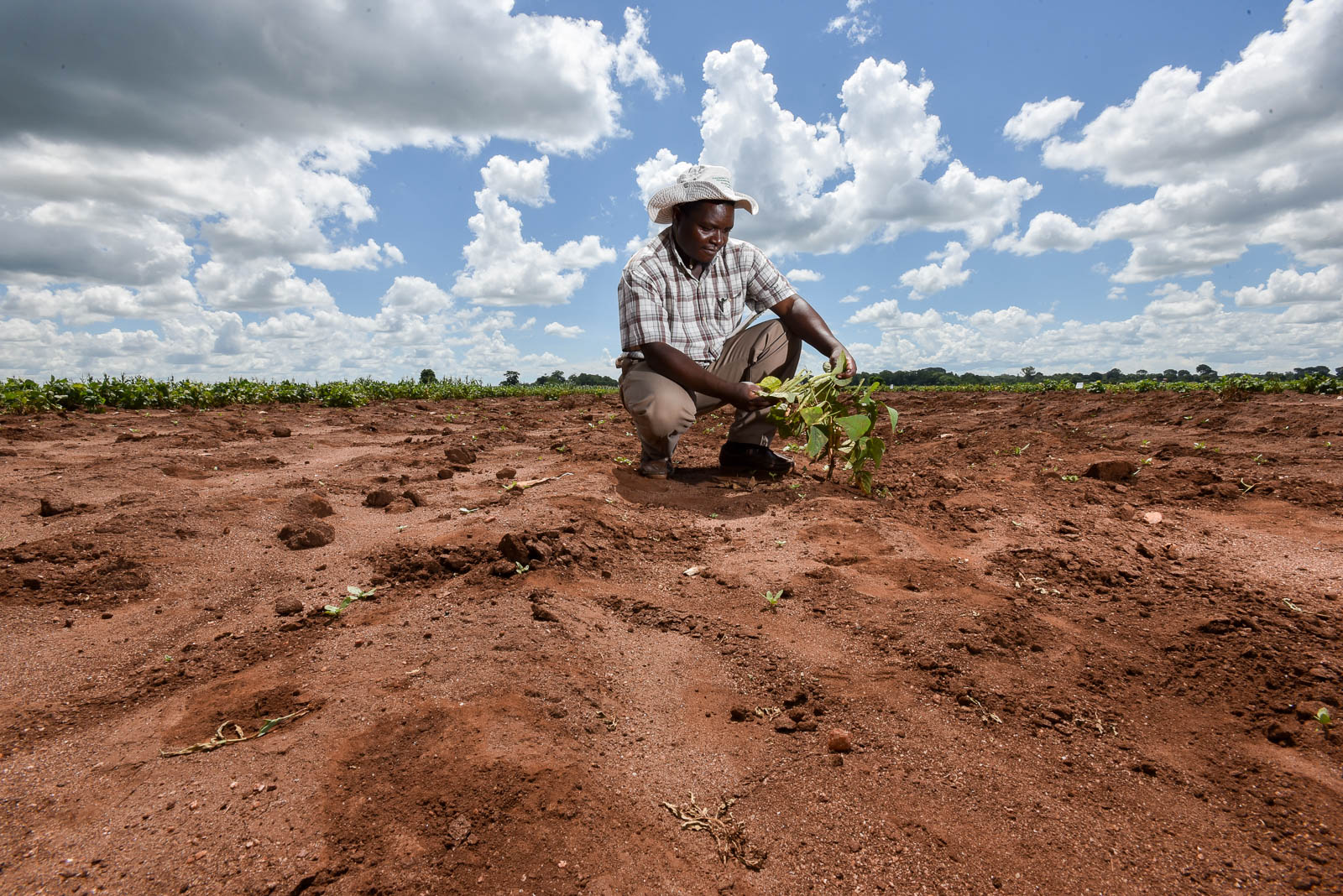 Crop Breeding and Soil Management Must Go Hand in Hand