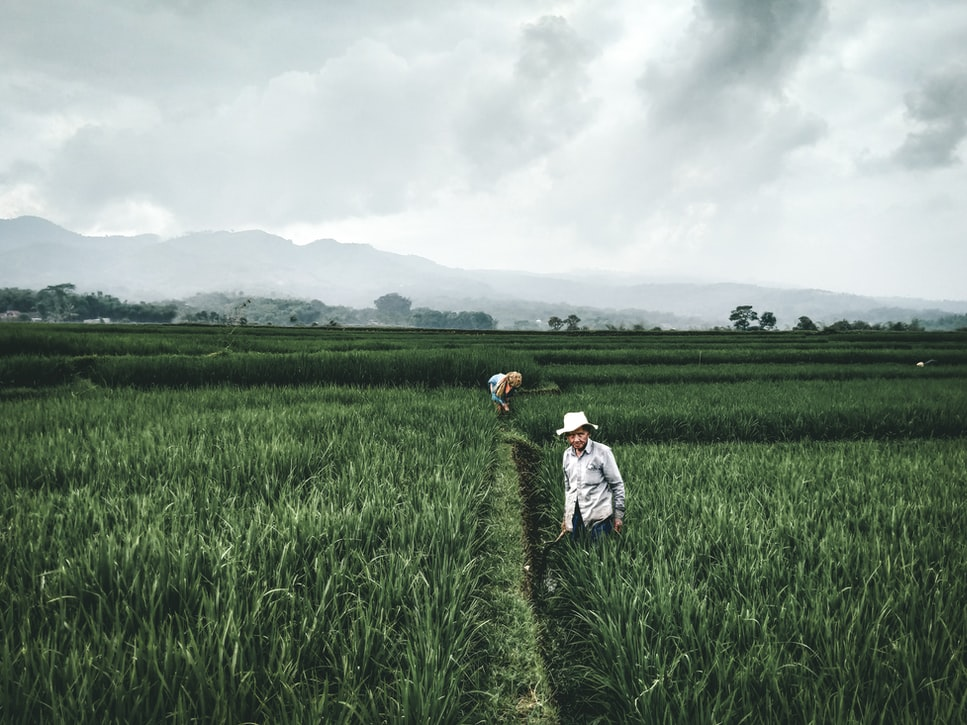 Efficiency Must Go Hand-in-Hand with Equity to Build Resilient Food Systems